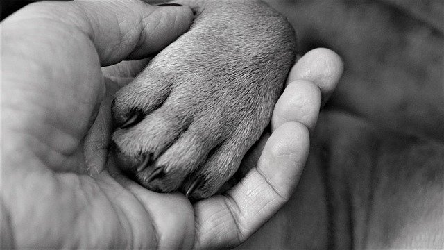 End of life care for pets is always loving and thoughtful.