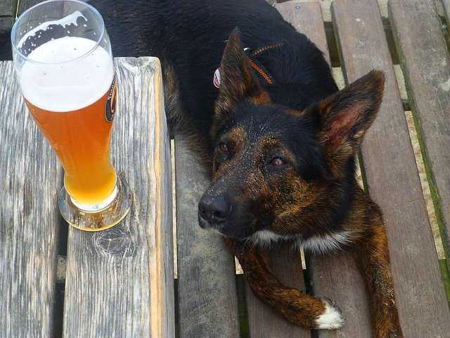 Grapes, Beer, and Nuts: People Foods You Should Avoid Giving to Pets